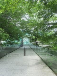 通りの脇に木がある小道の写真・画像素材[2205402]