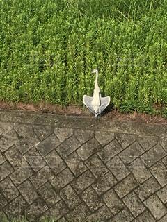 歩道の上に座っている鳥の写真・画像素材[1077758]