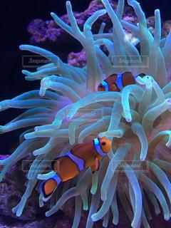 水の中の魚の群れの写真・画像素材[1077907]