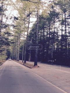 通り側の木と空の道の写真・画像素材[1078249]