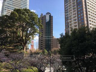 東京タワーと桜の写真・画像素材[1078403]