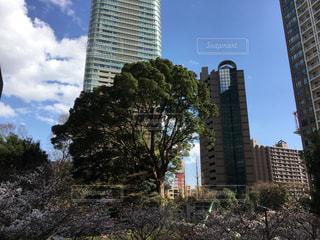 東京タワーと桜の写真・画像素材[1078405]