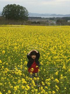 フィールドに黄色の花の前に立っている人 - No.1081116