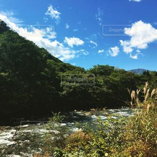 木々 に囲まれた湖の景色の写真・画像素材[1079297]