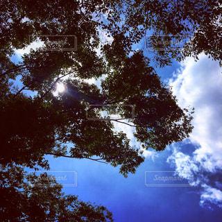 大きな木の写真・画像素材[1079298]