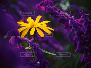植物の紫色の花の写真・画像素材[1078923]