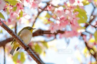 近くの枝に座っている小さな鳥のアップ - No.1079135