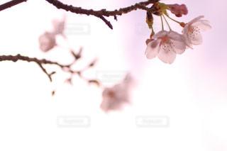 近くの花のアップの写真・画像素材[1082440]