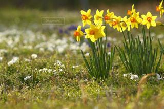 近くの花のアップの写真・画像素材[1082479]