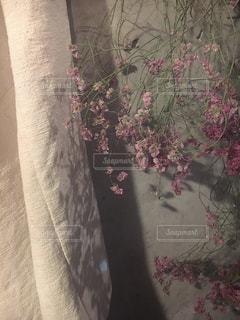 花の写真・画像素材[429777]