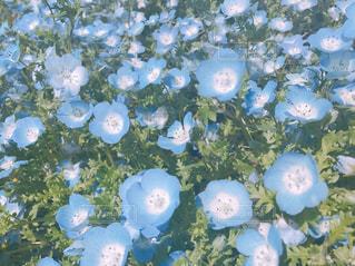 春の写真・画像素材[482538]