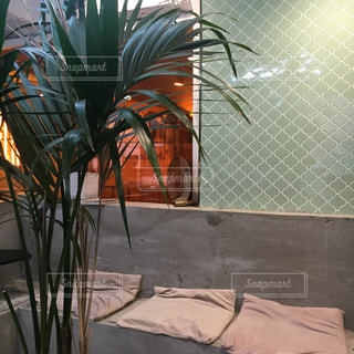 ヤシの木の前で工場の写真・画像素材[913121]