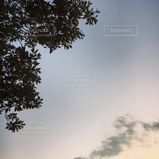 空の木の写真・画像素材[944210]