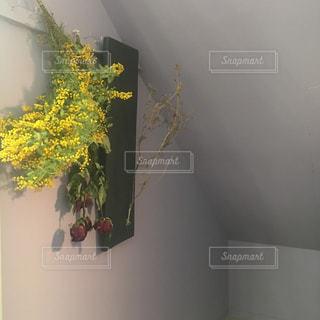 近くの花のアップの写真・画像素材[1124928]