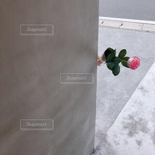 近くの花のアップの写真・画像素材[1523155]