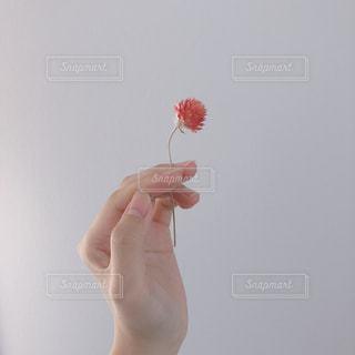 凧を持つ手の写真・画像素材[1550592]