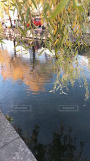 近くに池のアップの写真・画像素材[1783352]