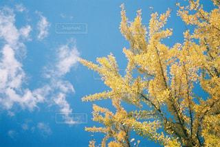 近くの木のアップの写真・画像素材[1783359]