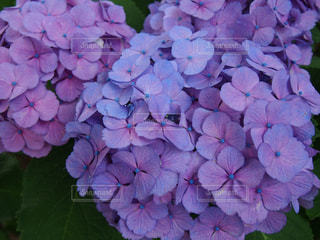 花の写真・画像素材[2248984]