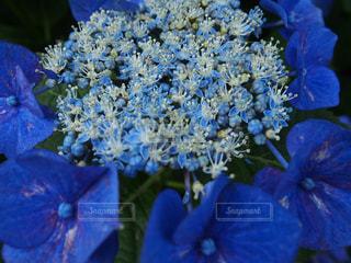 花の写真・画像素材[2248986]