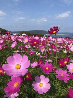 植物の上のピンクの花の写真・画像素材[2695145]
