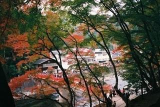 木の近くでの写真・画像素材[2695146]