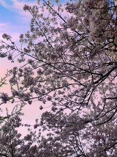 木のクローズアップの写真・画像素材[3159038]