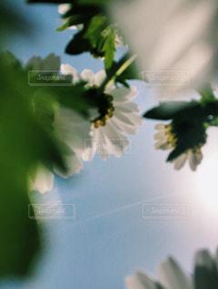 植物のクローズアップの写真・画像素材[3159037]