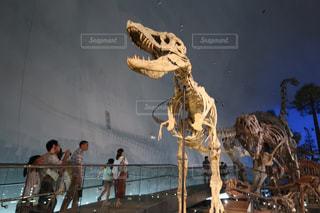 表示の恐竜の写真・画像素材[1079562]