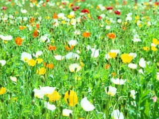 お花畑の写真・画像素材[106838]