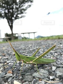 昆虫の写真・画像素材[1080139]