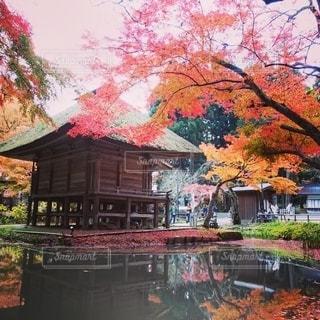 中尊寺の池の写真・画像素材[2688310]