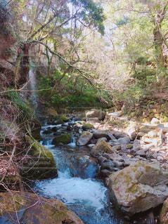 樹海にある小さな滝の写真・画像素材[1083600]