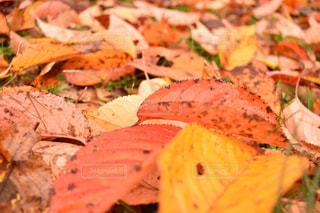 落ち葉の写真・画像素材[1080281]