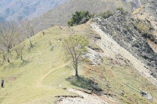 中倉山 孤高のブナの木の写真・画像素材[1080348]