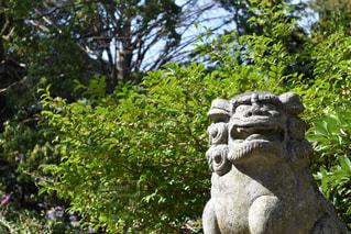 狛犬の写真・画像素材[1097031]