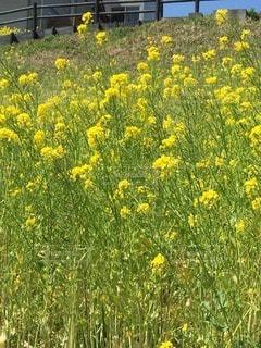 お花畑の写真・画像素材[64836]