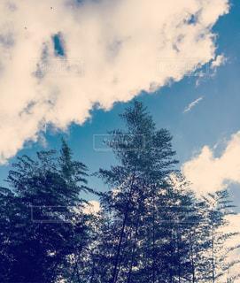 ざわめく竹林と青空の写真・画像素材[1080547]
