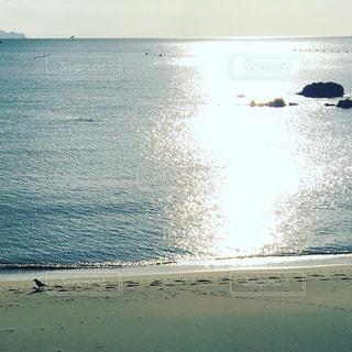 輝く海とカラスの写真・画像素材[1080927]