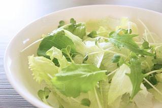 グリーンサラダの写真・画像素材[1085156]