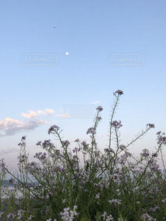昼の月と花の写真・画像素材[1267195]