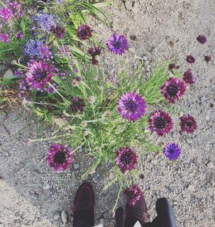 近くに紫の花のアップの写真・画像素材[1267197]