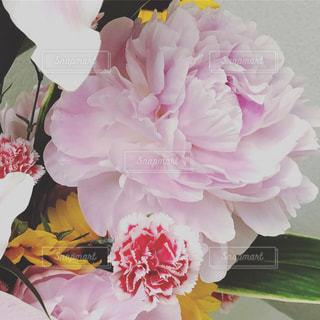 近くの花のアップの写真・画像素材[1267201]