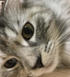 近くに猫のアップの写真・画像素材[1080770]