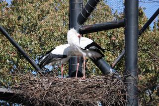 巣の上で仲良し野鳥の写真・画像素材[1080798]