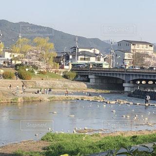 飛び石を渡る人々@春の京都出町柳の写真・画像素材[1089740]