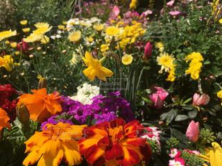 春の花々2の写真・画像素材[1090171]