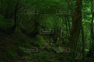 森林 - No.35278