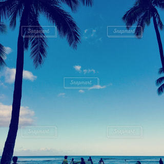 ヤシの木とビーチの人々の写真・画像素材[1081337]