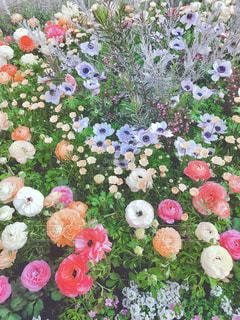 フラワー ガーデンの写真・画像素材[1083570]
